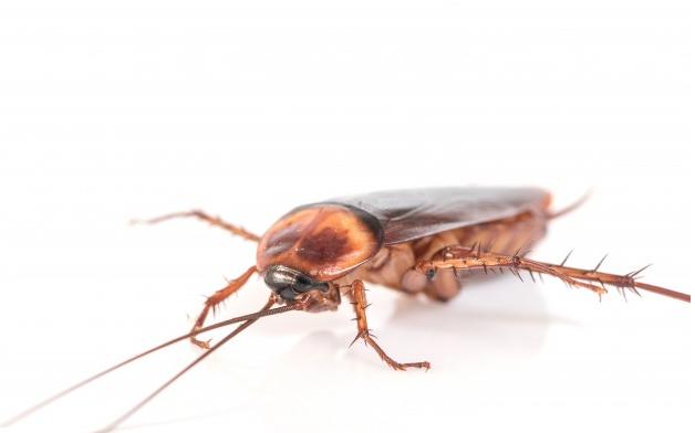 死ん ふり ゴキブリ だ