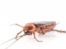 知りたくない・・・けど一人暮らしで知っておくべきゴキブリの生態とその正しい対処法。