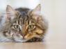 猫だけじゃない!動物に会えるカフェ5選!